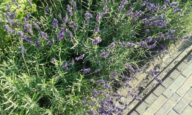 Wonderbaar 3 augustus: Gehaakt geurzakje voor lavendel | De waarde van de dag CU-81