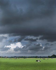 dreigende-lucht-met-koeien